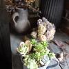 【季節で変えるインテリア小物】ハンドメイドで小物&壁飾り!庭の花を活用して手作りスワッグも!