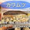 カワムツの飼育・混泳・生息地・購入日本淡水魚徹底解説!