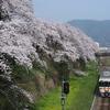 山北駅周辺の桜を撮りに行って来た。