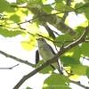 暑さが恋しい6月の釧路 野鳥さんとアゲハ蝶
