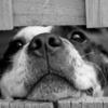 頑張らないと言う選択 ~愛犬の闘病、もう一つの側面(2/4)~