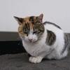 硫黄山の写真とコンビニ前の猫