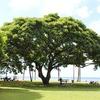 【北海道】クワガタ樹液採集「ご神木」は今年も健在かなー?