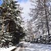 雪道は亀走行で