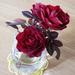バラの植え替えと寄せ植えのリニューアル