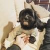 オシャレな犬用キャリーバッグは【フリーステッチ Free Stitch】で間違いない!