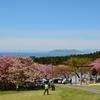 桜の見納めは石崎地主海神社で…
