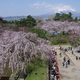 もう一度行きたい桜の名所【弘前城】