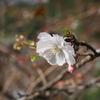 奥宇辰山県民公園の紅葉と十月桜(後編)