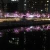【五反田〜大崎】イルミネーションデートで冬の桜を見に行こう