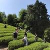協力隊が宇治茶の産地でGWに茶摘み体験を実施したで!