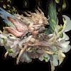 【グラブル】風神石ゼピュロス理想編成まとめ【2018年6月更新】