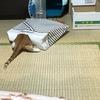 ⑥のら猫えんちゃんばんちゃん日記
