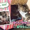 おじいちゃんニャンコと赤ちゃんニャンコ Senior cat and Kitten