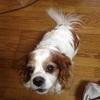 老犬介護日記終了から4ヶ月。続くペットロス