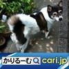 生活シーンに優しく溶け込む【ぬい撮り】の世界 cari.jp
