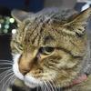 12月後半の #ねこ #cat #猫 その3