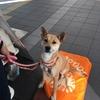 阪急伊丹駅にて♫