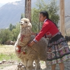 【ペルー周遊ツアー20】帰路のエクスペディション号とアンデスの生活風景見学