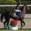 競馬の格言 「人気馬の1本かぶりを外せ」の高配当実例を調べてみた。