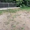 初心者の家庭菜園 2年目 にんじんを植えた