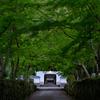 京都・宇治 - 興聖寺 琴坂の新緑ライトアップ