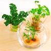 無料観葉植物( *´艸`)