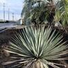 冬のドライガーデン植物