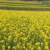 むつみひまわりロード|インスタ映えする花の絶景地
