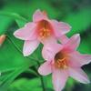 6月23日誕生日の花と花言葉歌句