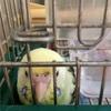 🐦 🐦 🐶 2羽とI匹の賑やかな朝