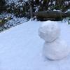 パラミツ(ジャックフルーツ)の栽培② 雪、霜、氷点下、そんな中の冬越え…