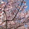 四月/今日の俳句 ≪第2458号≫