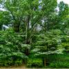 🐦野鳥の回【79】シジュウカラの場合・他ヤマガラ、エナガ(奈良馬見丘陵公園3)