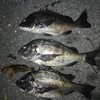 3月12日   中潮  2夜連続釣行