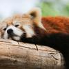 お昼休みに仮眠をしたら、すごく良かった話【仕事の効率UP】