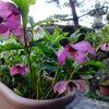 わが家の庭にもようやく春が・・・