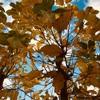 秋の葉っぱと空が美しい