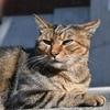 😺小石川植物園にいる猫