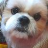 国産ハンドメイドの犬用チャンチャンコ★Pooh Kuru(ぷぅくる)/他、外れ易いお腹の部分のカスタムの仕方