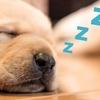 仕事に行きたくない!眠い! そんな時は二度寝をしたら?