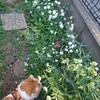 地味な庭にも春はきて。