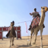 "Nissan ""Camel Power"""