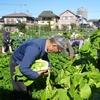 <農業講座日記> 持ちきれるかな⁉ 収穫本番(11月5日)