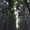 嵐山・竹の小径へ行ったらトロッコ列車にも乗ろう ~~ライトアップも素敵~~