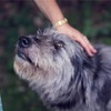 伊豆ぐらんぱる公園は犬連れにも優しい
