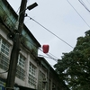 鳥の国へ旅立つカイヌシと居残りまめむ 台湾鳥的スポットとペットシッター編②