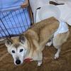 【ショートステイ】老犬モコちゃん