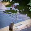 【255】台東区上野公園 小ちゃいころの夏の匂い