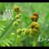 蕨(わらび)